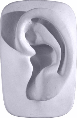Davids Parts Ear Plaster Plaque